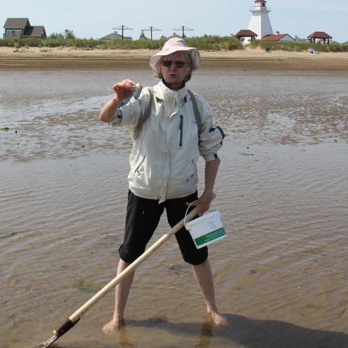 La pêche au coques aux Chalets de la plage de Bas-Caraquet